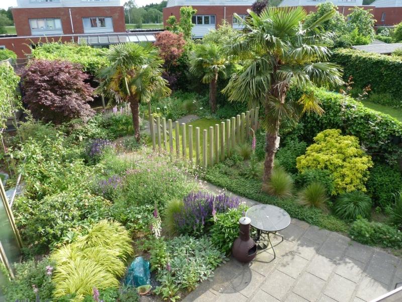 Exotische tuin met palmbomen - Vicas Tuinontwerpen