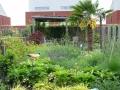 exotische tuin met wilde beplanting