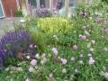 tuinontwerp weelderige beplanting