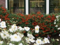 Beplanting voortuin Woerden Utrecht - tuinontwerp