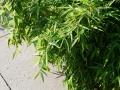 onderhoudsarme leeftuin met niet-woekerende bamboe