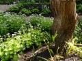 ontwerp schaduwtuin schaduwplanten