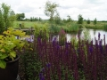 ontwerp tuin aan het water Utrecht