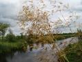 tuinontwerp siergrassen Stipa gigantea