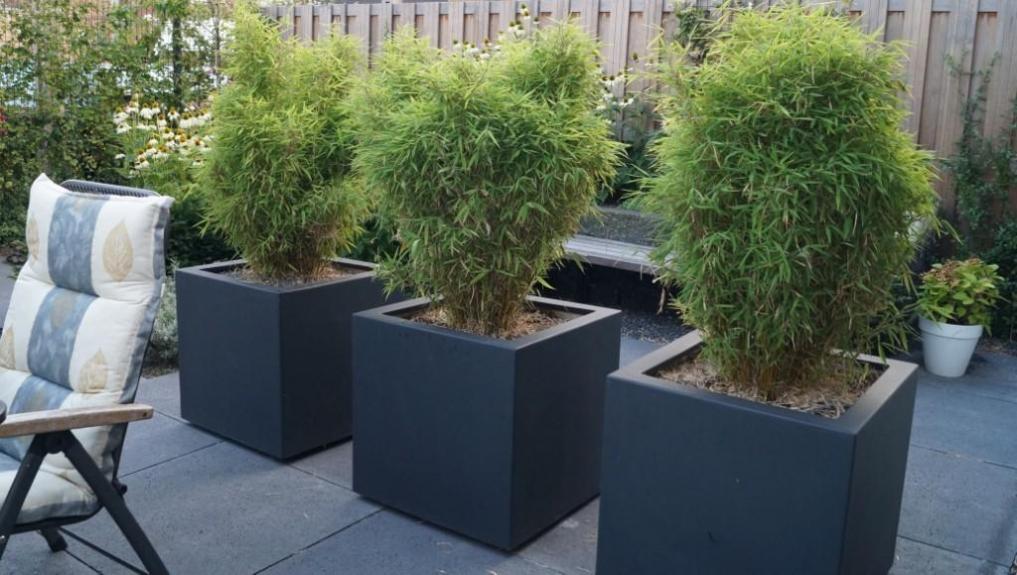 Tuinontwerp kleine tuin met flexibel terras vicas for Opleiding tuin