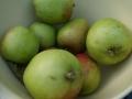 Tuinontwerp met fruitbomen Woerden