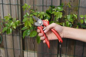 tuinkalender-tuinonderhoud-snoeien