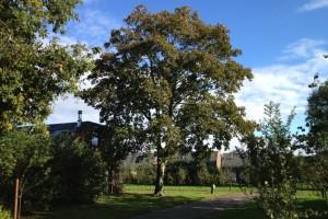 groen- en terreinbeheer