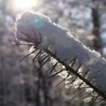tak met sneeuw - tuinkalender januari