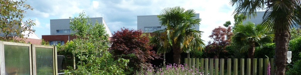 tuinontwerp exotische tuin