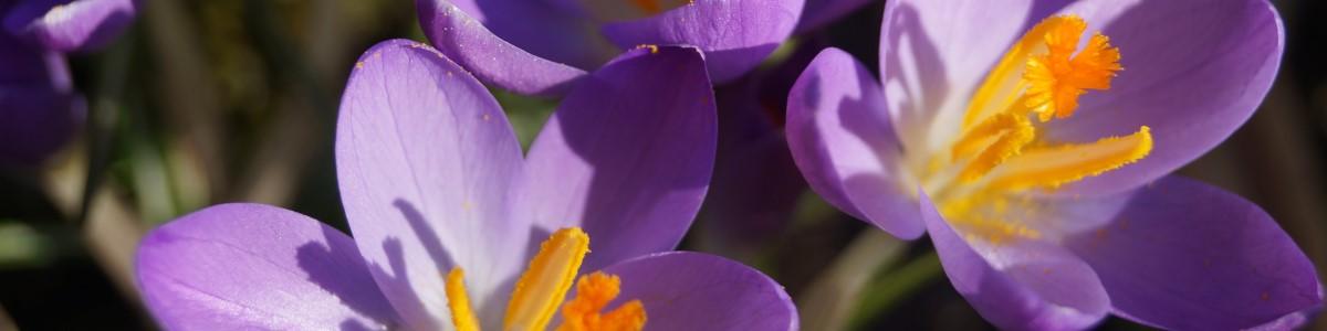 tuinkalender maart