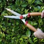 tuinkalender augustus - foto Vicas Tuinontwerpen