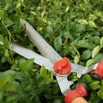 Tuinkalender september - Vicas Tuinontwerpen