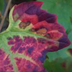 tuinkalender september - foto Vicas Tuinontwerpen