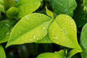 Subsidie op groen dak en op afkoppelen hemelwaterafvoer