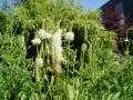 beplantingsplan met onderhoudsarme prairieplanten