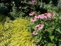prairiebeplanting met geelbladig siergras en zonnehoed