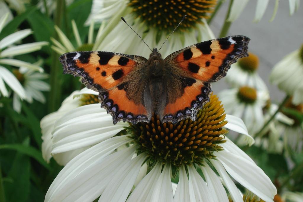 belevingstuin verpleeghuis IJsselstein vlinderlokkende planten