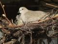 belevingstuin Alzheimerpatienten- vogels lokken