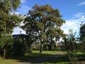 landschapsbeheer vakantiepark - groenonderhoud