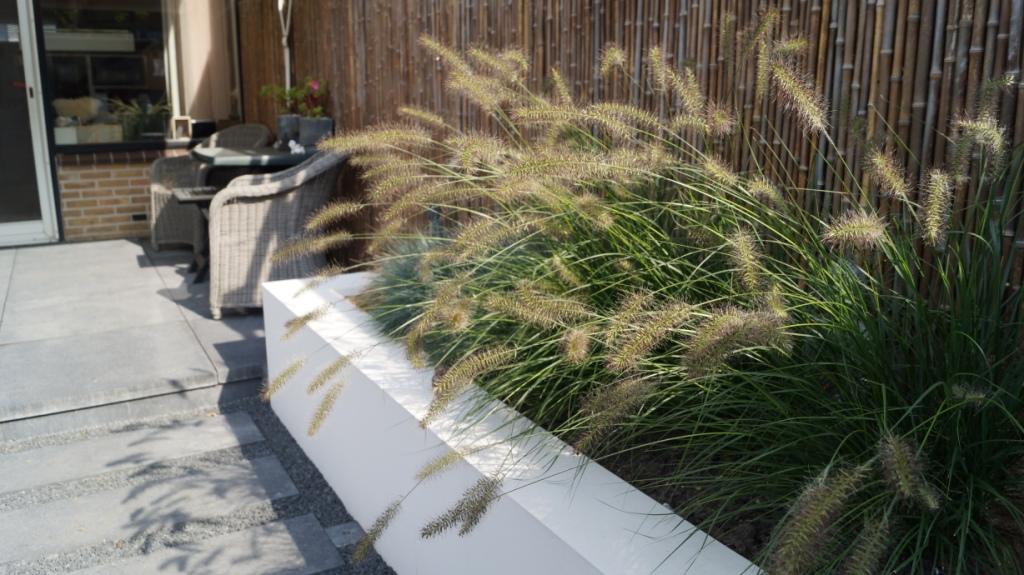 moderne tuin verhoogde borders met lampepoetsersgras