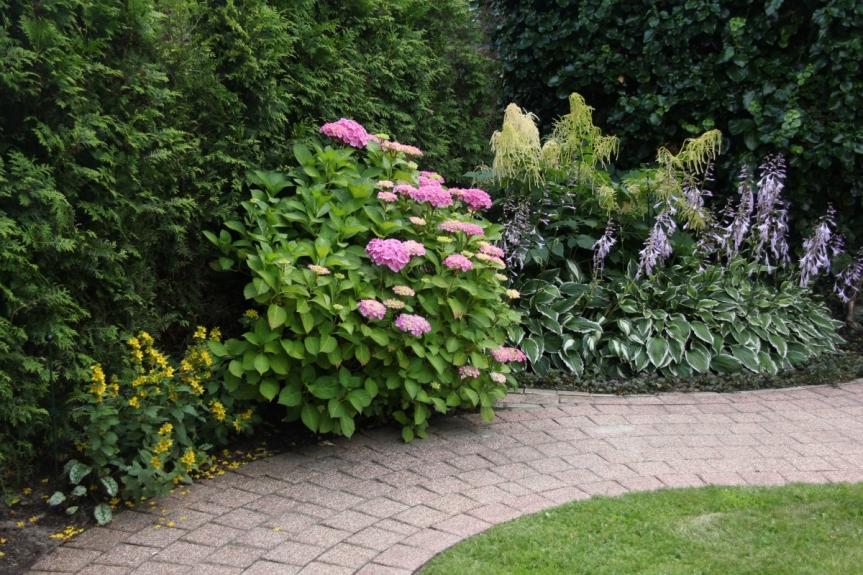 schaduwplanten - tuinontwerp Utrecht