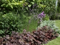 metamorfose tuin - borderplanten combinatie