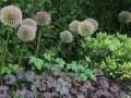 plantencombinatie met Allium en Heuchera - tuinarchitect