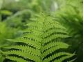 beplantingsschema met bladplanten en schaduwplanten