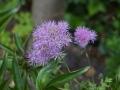 romantische tuin met weelderige beplanting