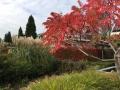 beplantingsplan herfstkleuren herfstborder