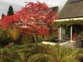 herfstkleuren beplanting herfstborder