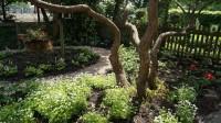 schaduwtuin planten tuinontwerp