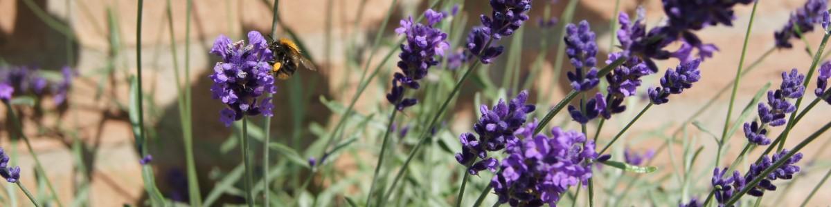 tuinkalender augustus - Vicas Tuinontwerpen