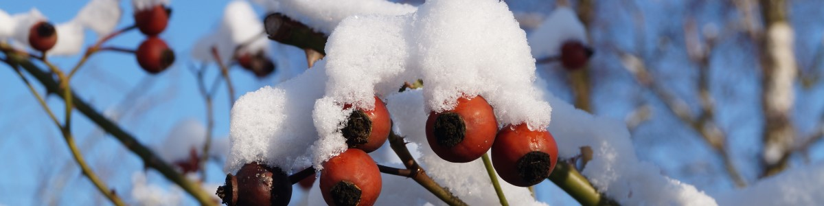 Tuinkalender januari - Vicas Tuinontwerpen
