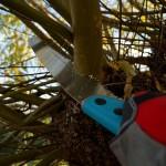 tuinkalender december - foto Vicas Tuinontwerpen