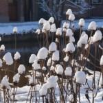 tuinkalender februari - foto Vicas Tuinontwerpen