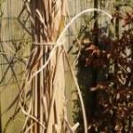 siergras afknippen - tuinkalender maart - Vicas Tuinontwerpen