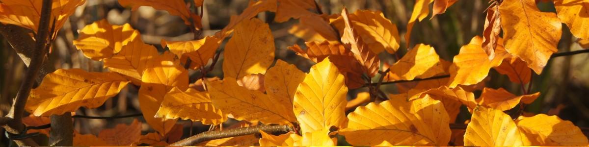 tuinkalender oktober - Vicas Tuinontwerpen