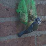 Vogels voeren - tuinkalender januari