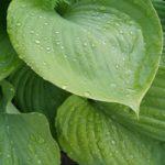 slakbestendige planten