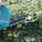 tuinkalender juli - haag niet snoeien in de zon