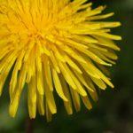 tuinkalender juli - onkruid